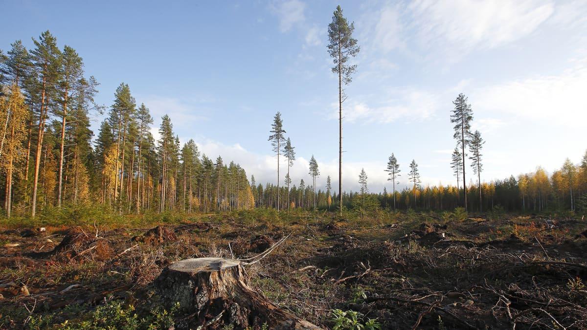 VTT esittelee Suomen keinoja hiilineutraaliuden saavuttamiseksi