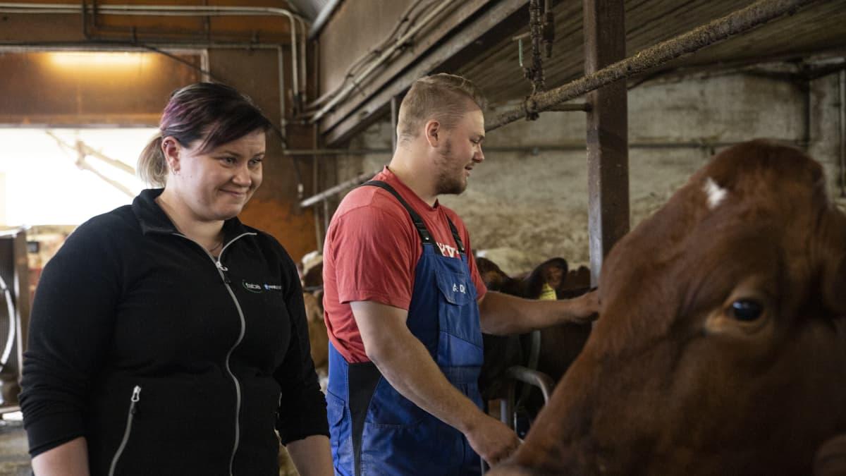 Jarkko Hyttisellä ja Anni Heiskasella on koulutusta ja kokemusta maataloudesta. Niistä on hyötyä nyt oman maitotilan pyörittämisessä.