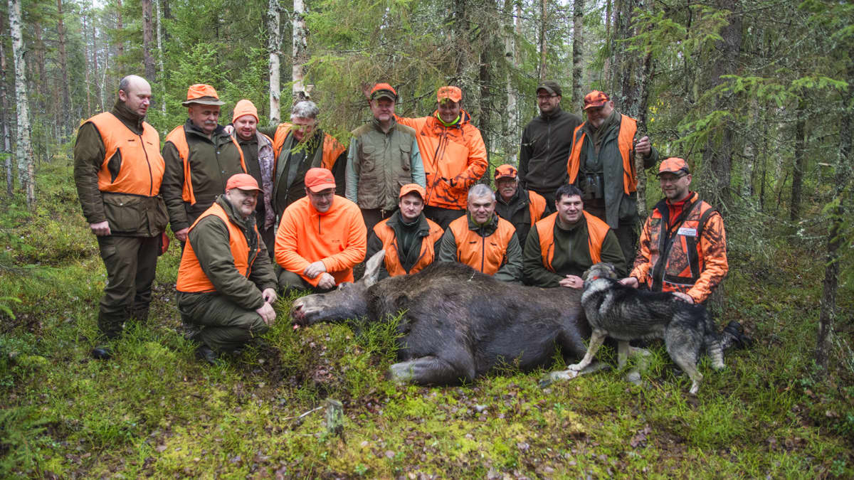 Metsästys hirvi raato hirvimetsä ryhmä metsästäjät ryhmäkuva