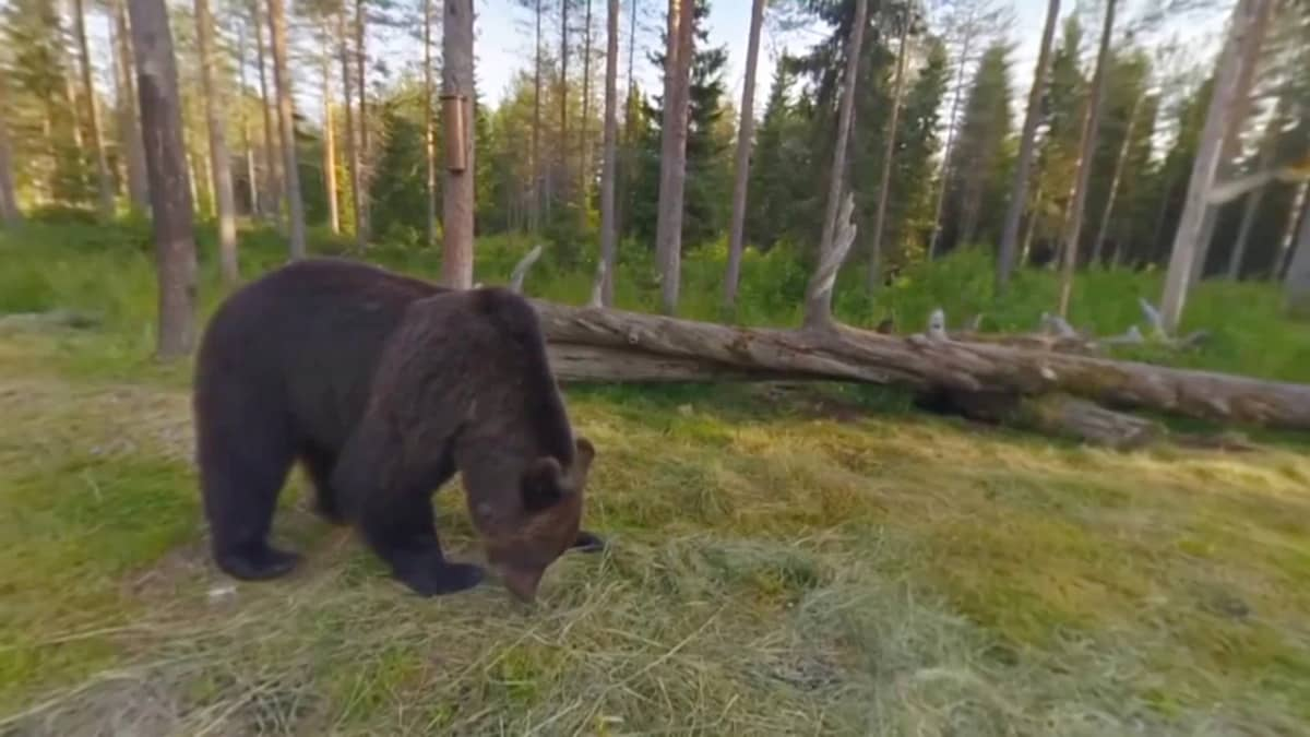 Karhulivekuvaa