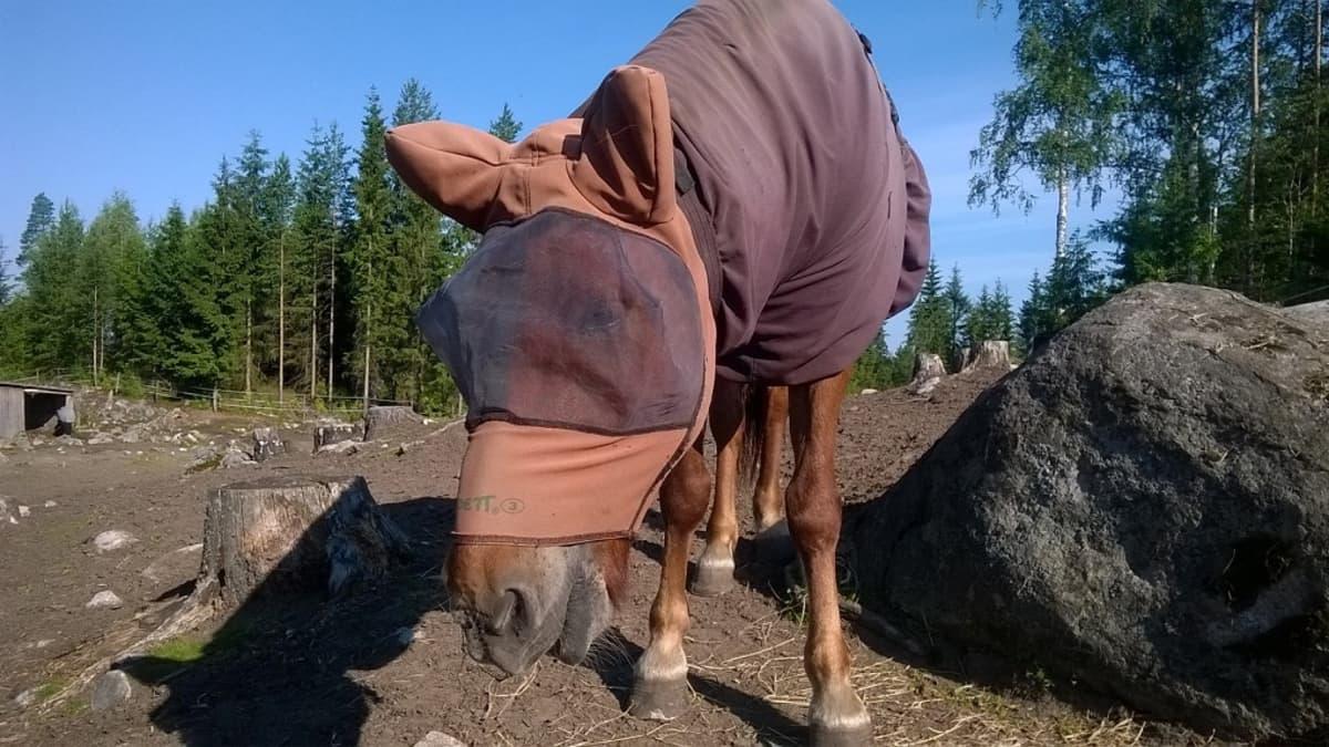 Huputettu hevonen.