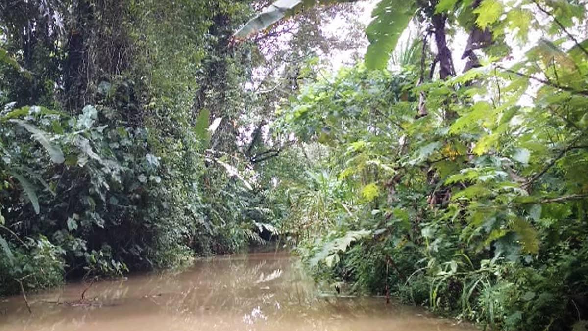 Joki sademetsässä.