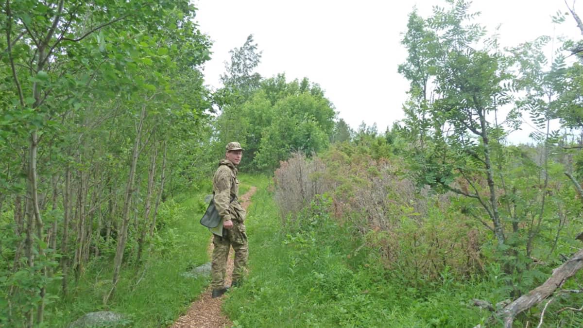 Metsähallituksen suojelubiologi Marko Sievänen kävelee katajahakkeella katettua polkua Selkä-Sarven saaressa.