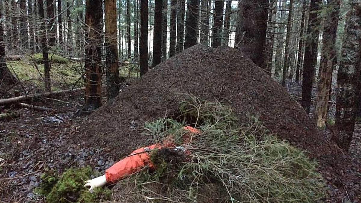 käsi kurottaa muurahaispesästä