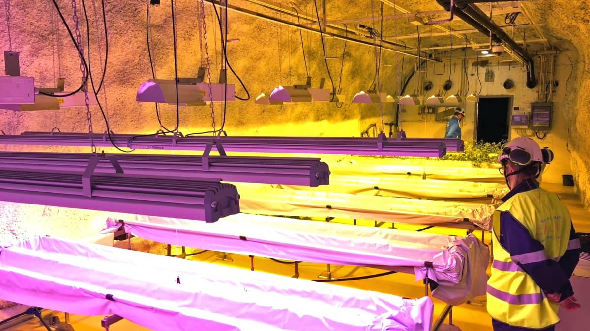 Pyhäsalmen kaivoksen kasvuhuoneen valaisimia