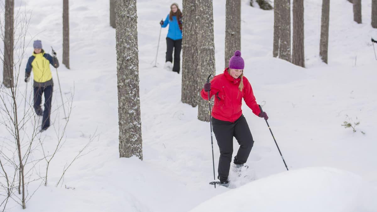 Kolme ihmistä lumikenkäilemässä metsän keskellä.