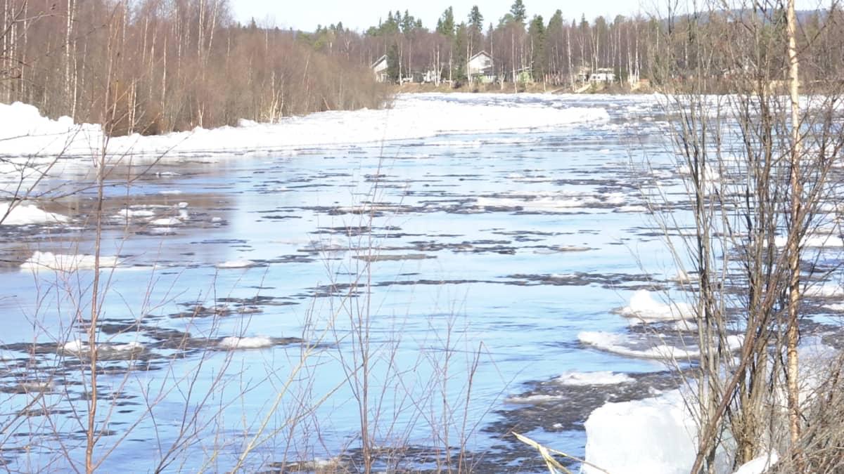Avviljohka, Ivalojoki