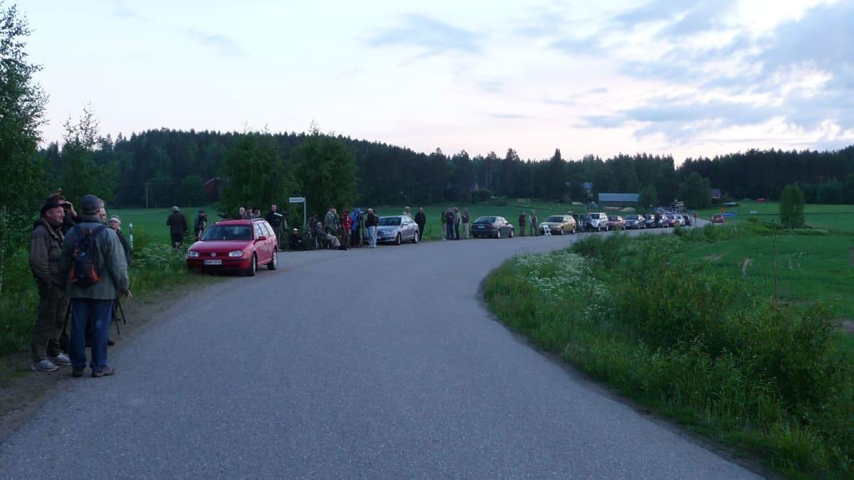 Lintuharrastajia autoineen tien laidassa Hauholla kyläpöllösen houkuttelemina
