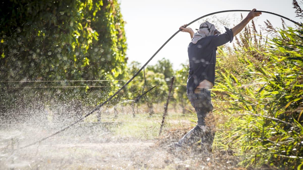 Australialainen maanviljelijä käyttää kastelulaitetta.