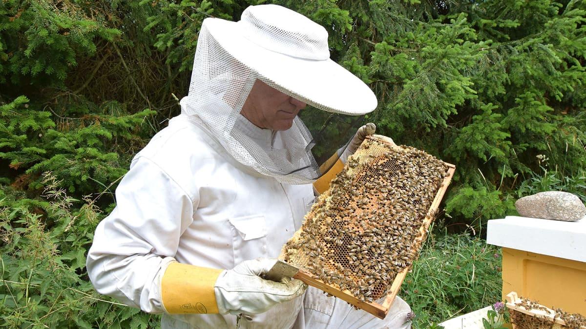 Valkoiseen suojapukuun pukeutunut mehiläistarhaaja työssään