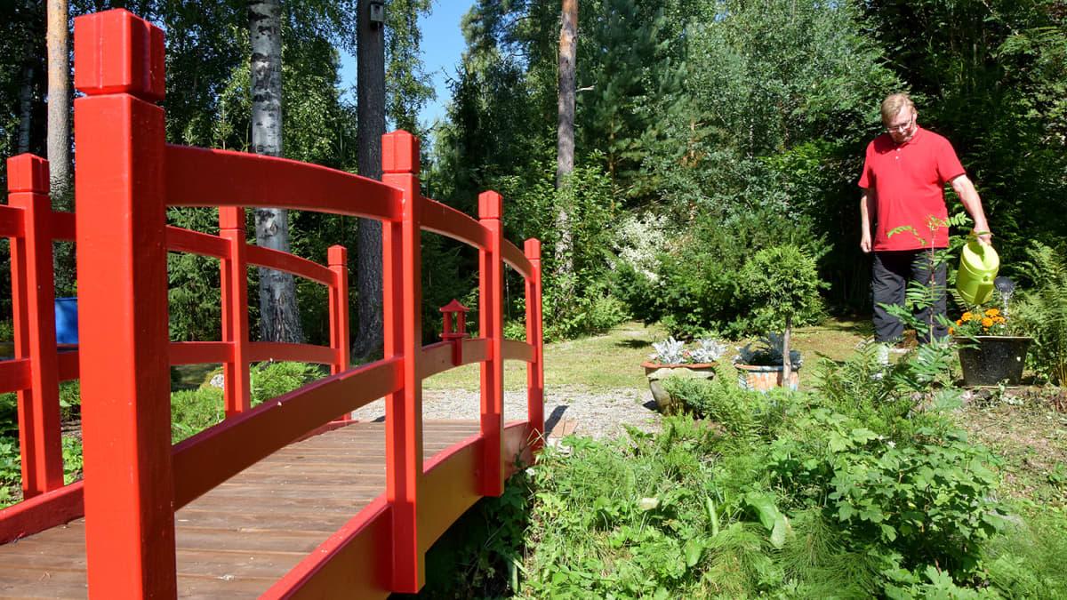 Mies kastelee puutarhan kasveja pienen punaisen sillan vieressä