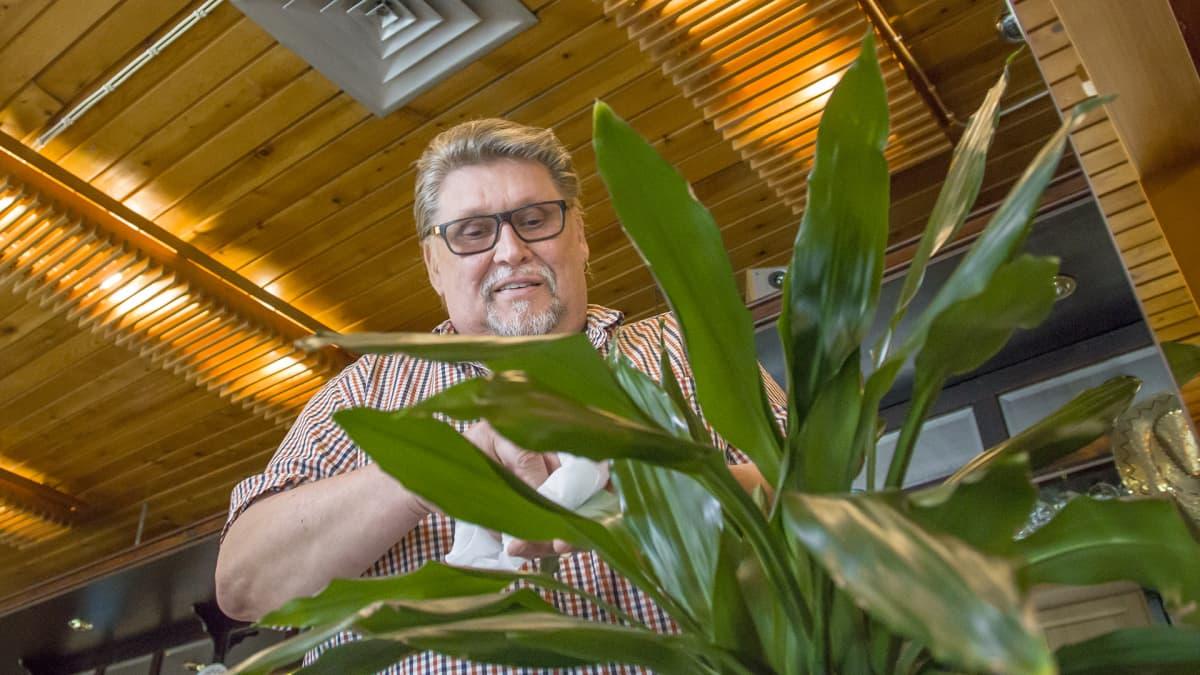 Juha Willman huonekasveja hoitamassa.