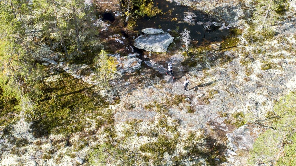 Metsässä juoksevat polkujuoksijat on kuvattu ilmasta.