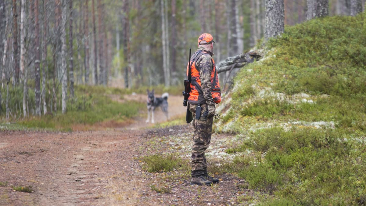 Hirvimetsä metsästys metsästäjä koira koiranomistaja harrastus hirvikoira