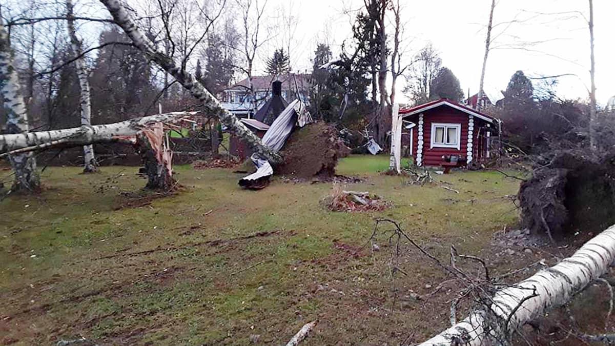 Kaatuneita puita