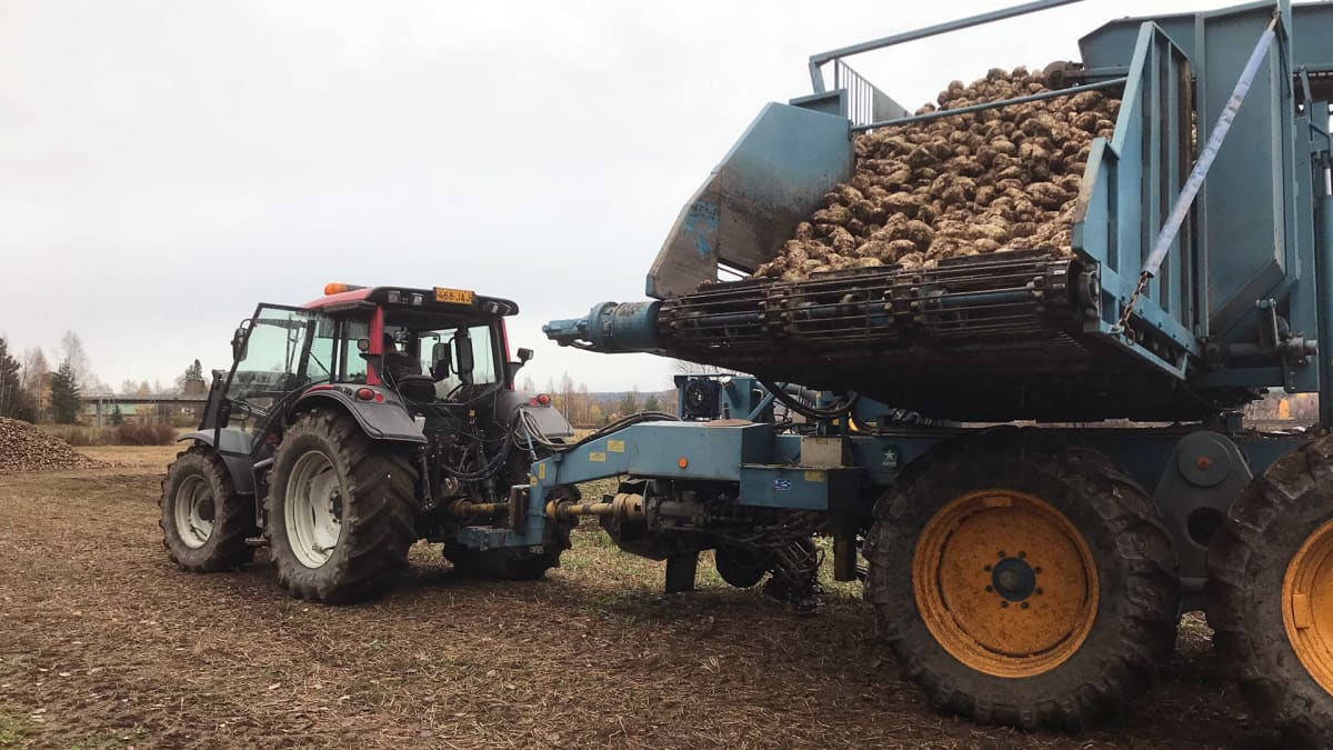 Traktori ja juurikkaannostolaite