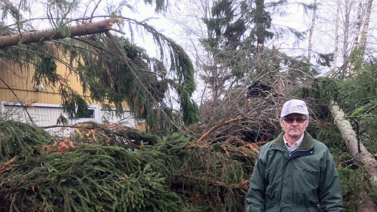 Mies seisoo kaatuneiden puiden edessä