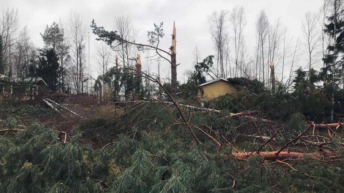 Kaatuneita puita talon lähellä Hattulassa
