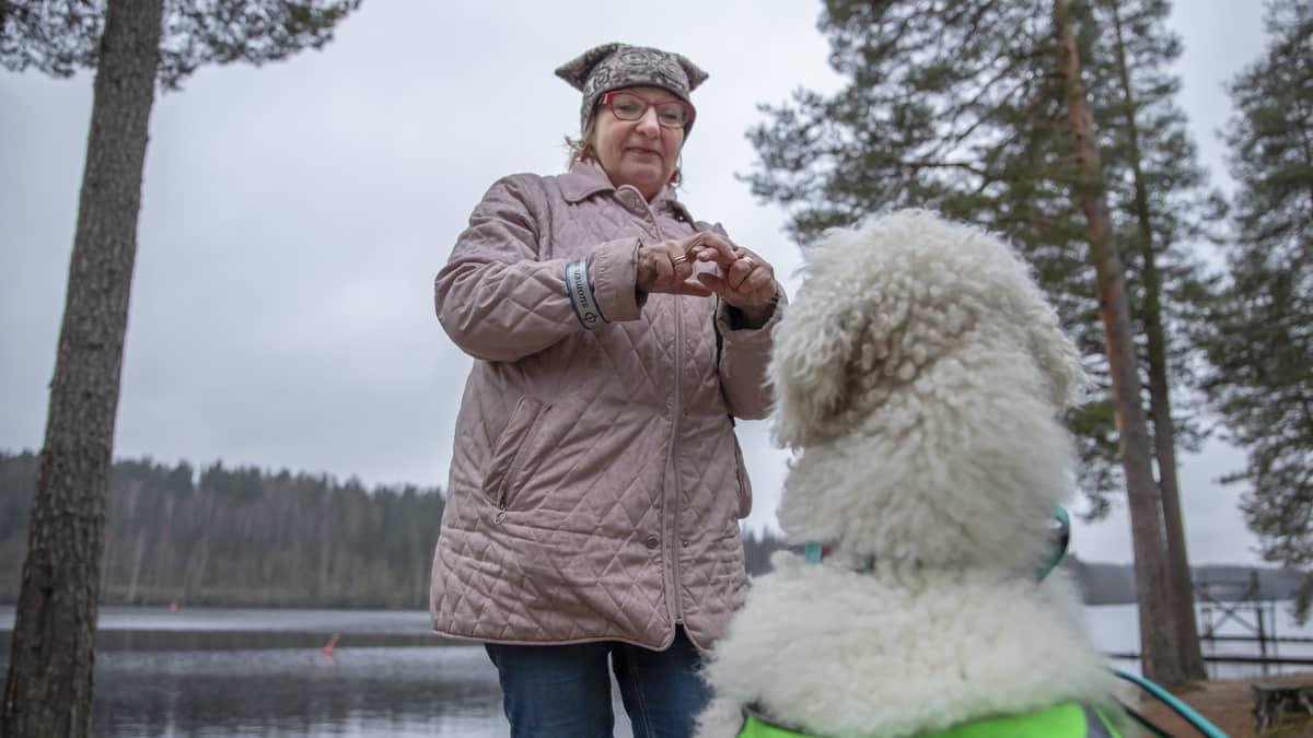 Turre-koira katsoo kun emäntä Pirjo Lahtinen viittoo.