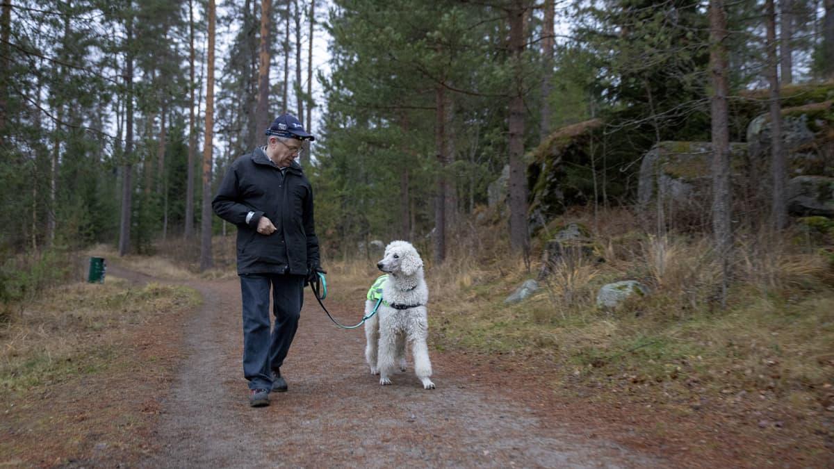 Otto Lahtinen taluttaa Turre-koiraa.