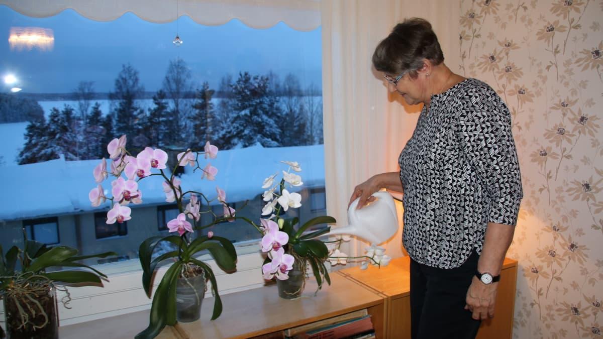 Paula Ahokainen kastelee kukkia
