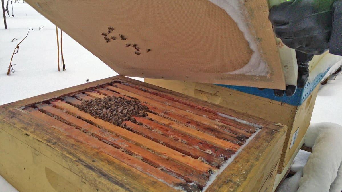 Mehiläiset pesässään talvipallossa.