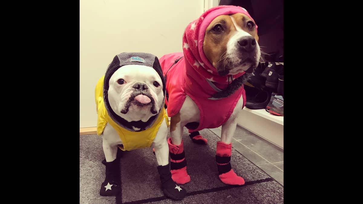 Koirat talvivaatteissa
