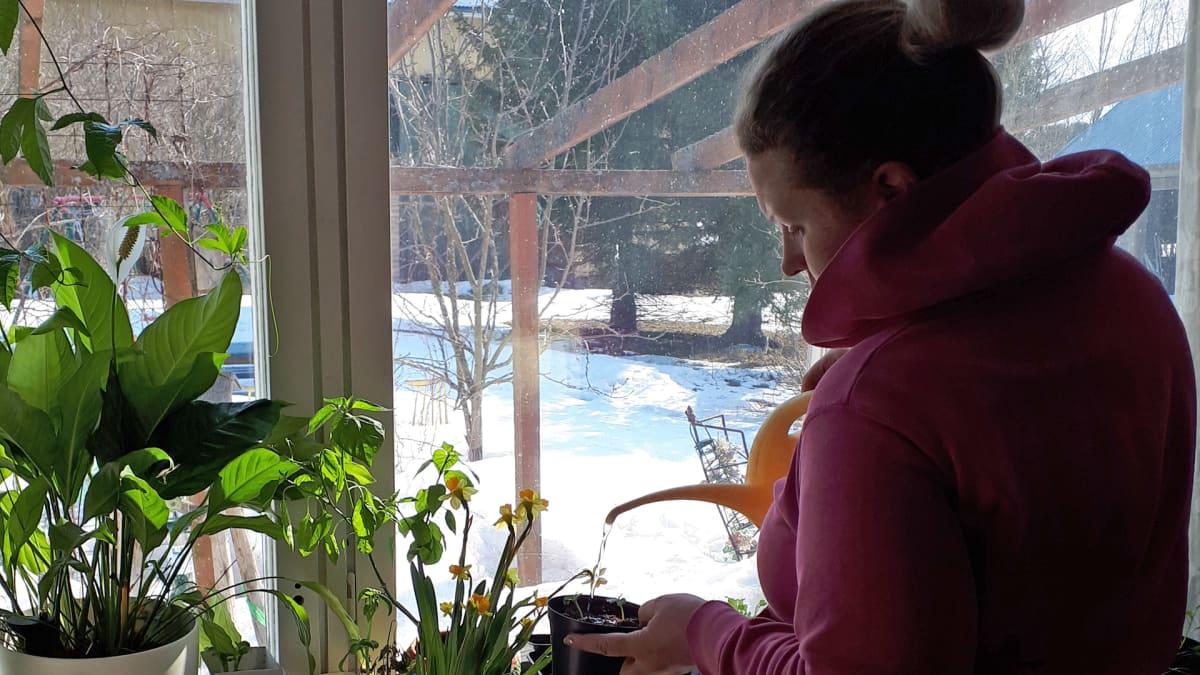 Hailuotolainen Iiris Poukkanen kastelee kukkia, koska ei päässyt aamulla töihin