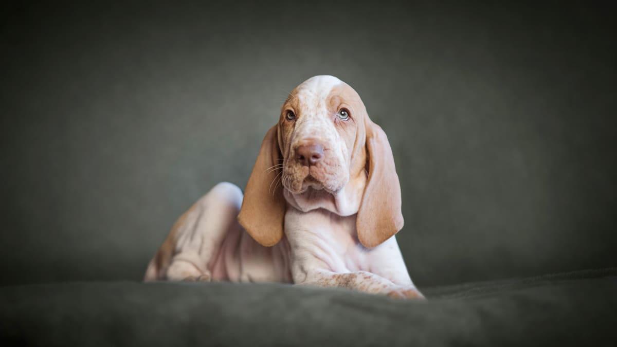 Koira valokuvassa