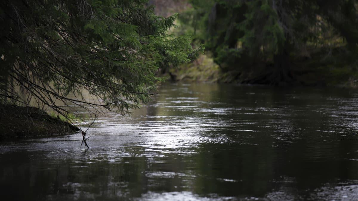Hiitolanjoki Rautjärvellä