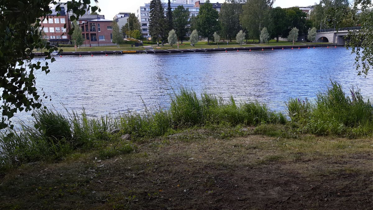 Järven rantaa kerrostaloja taustalla