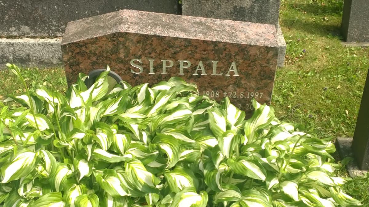 Matti Sippalan hauta