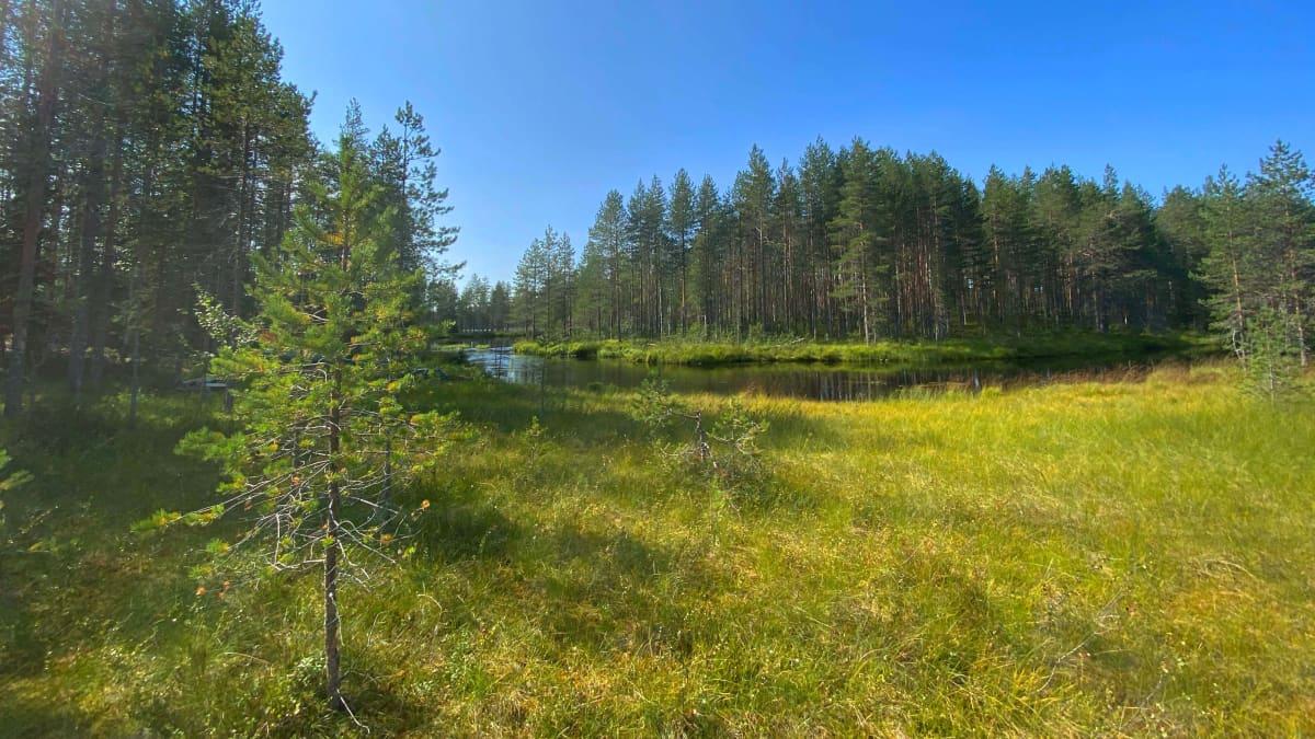 Tiilikkajärven kansallispuistossa on runsaasti vesistöä