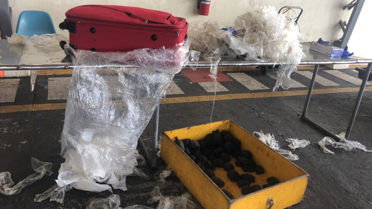 matkalaukku ja lattialla paljon kilpikonnia