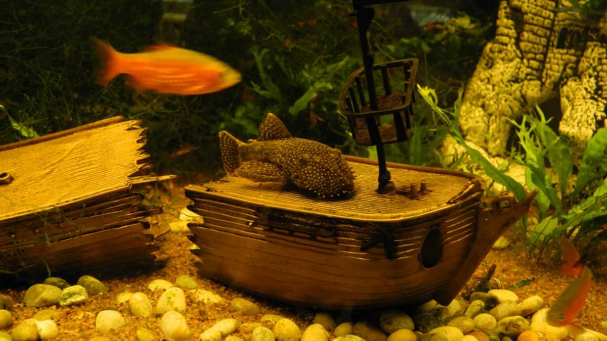 Kaloja akvaariossa.