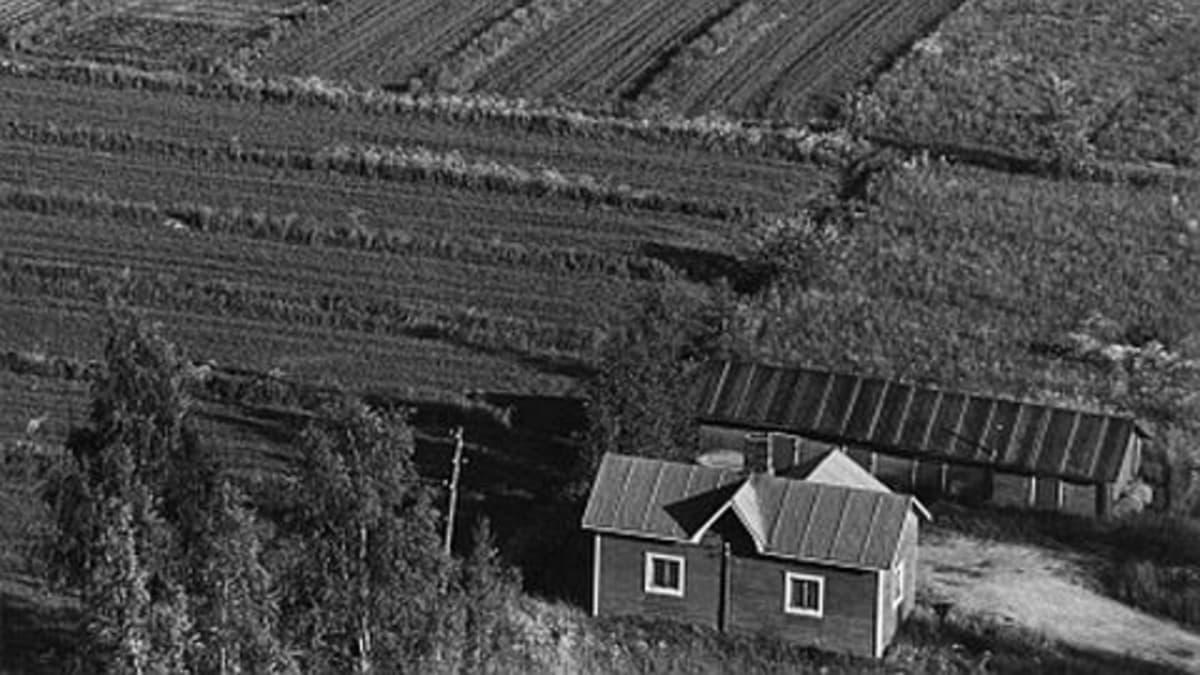 Vanha kuva maatalotilasta.