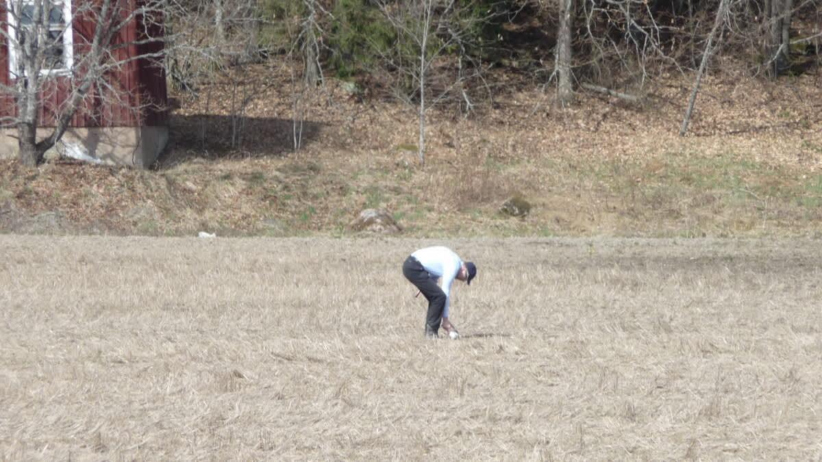 Maanviljelijä tutkii peltoa kylvöä varten Paimiossa.