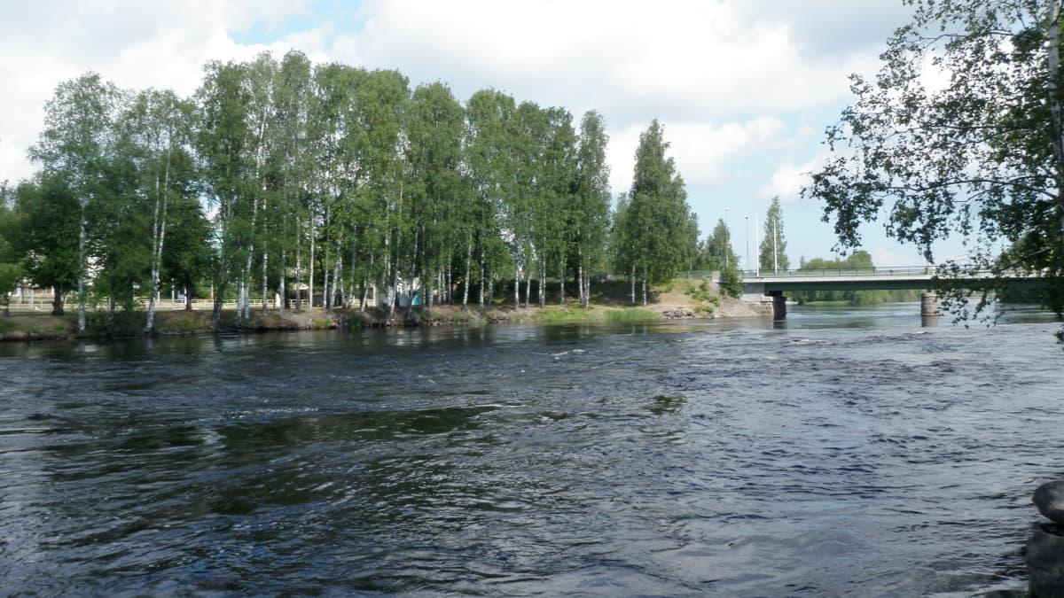Pielisjoki.