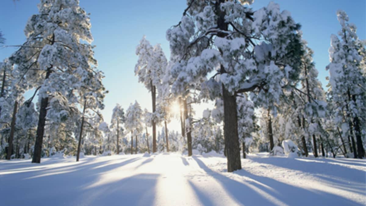 Suojasää moninkertaistaa lumen painon puiden oksilla.