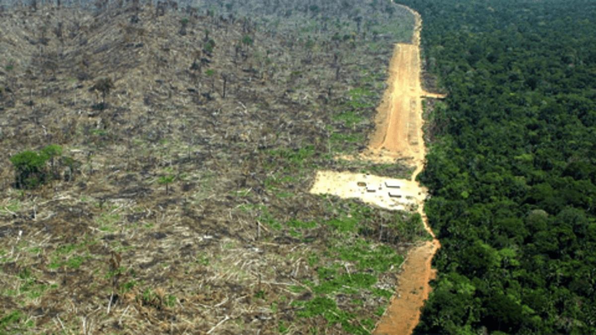 Soijan viljelijät  ovat hakanneet sademetsää raivatakseen sen viljelymaaksi.