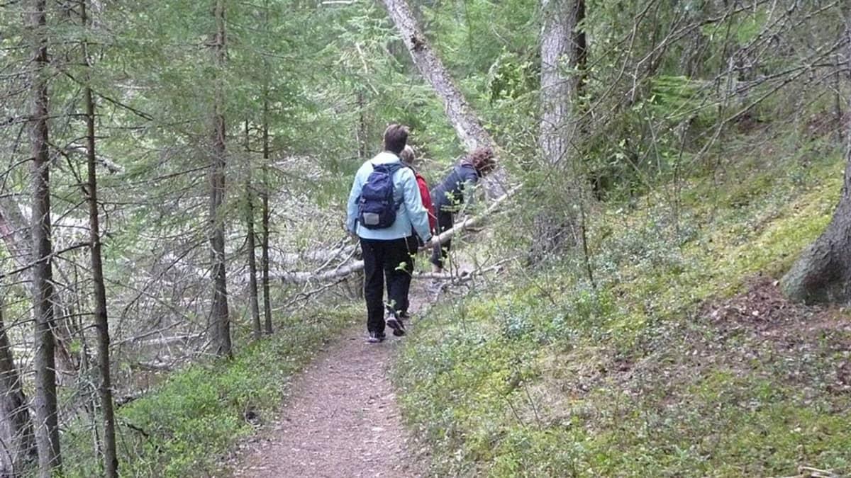 Kuvassa päivävaelluksella metsässä polkua pitkin. Viimeisellä kullkijalla on selässään pieni reppu.