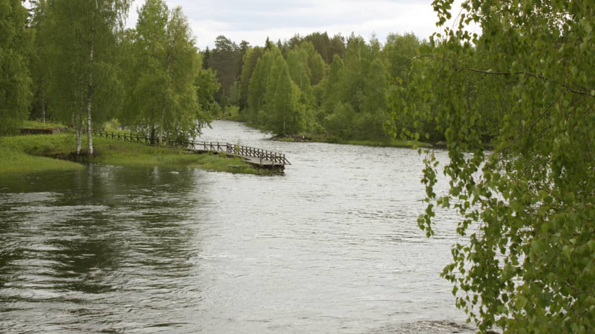 Koitajoki kesällä.