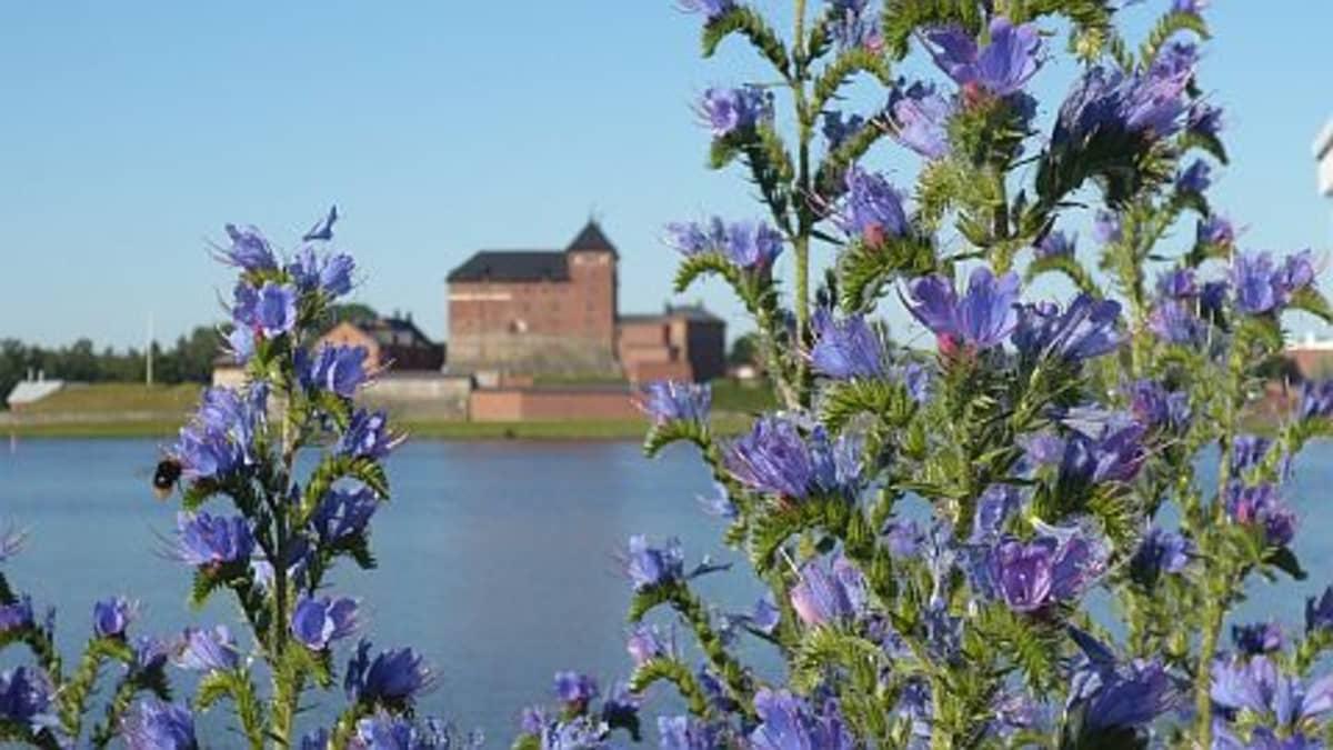 Neidonkieliä ja taustall Hämeen linna