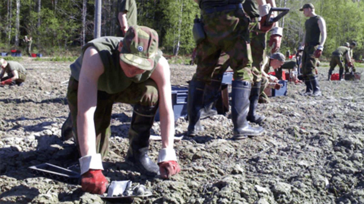 Varusmiehet raivaavat peltoa Juupajoella.