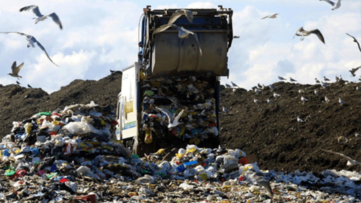 Jäteauto tuo talousjätteitä kaatopaikalle. Lokit lentävät ympärillä.