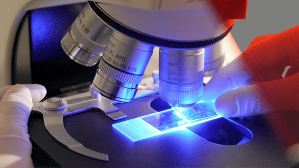 Mikroskoopilla tutkitaan H1N1-virusta.