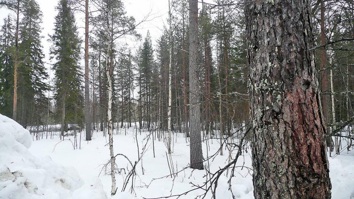 Hiljainen metsä