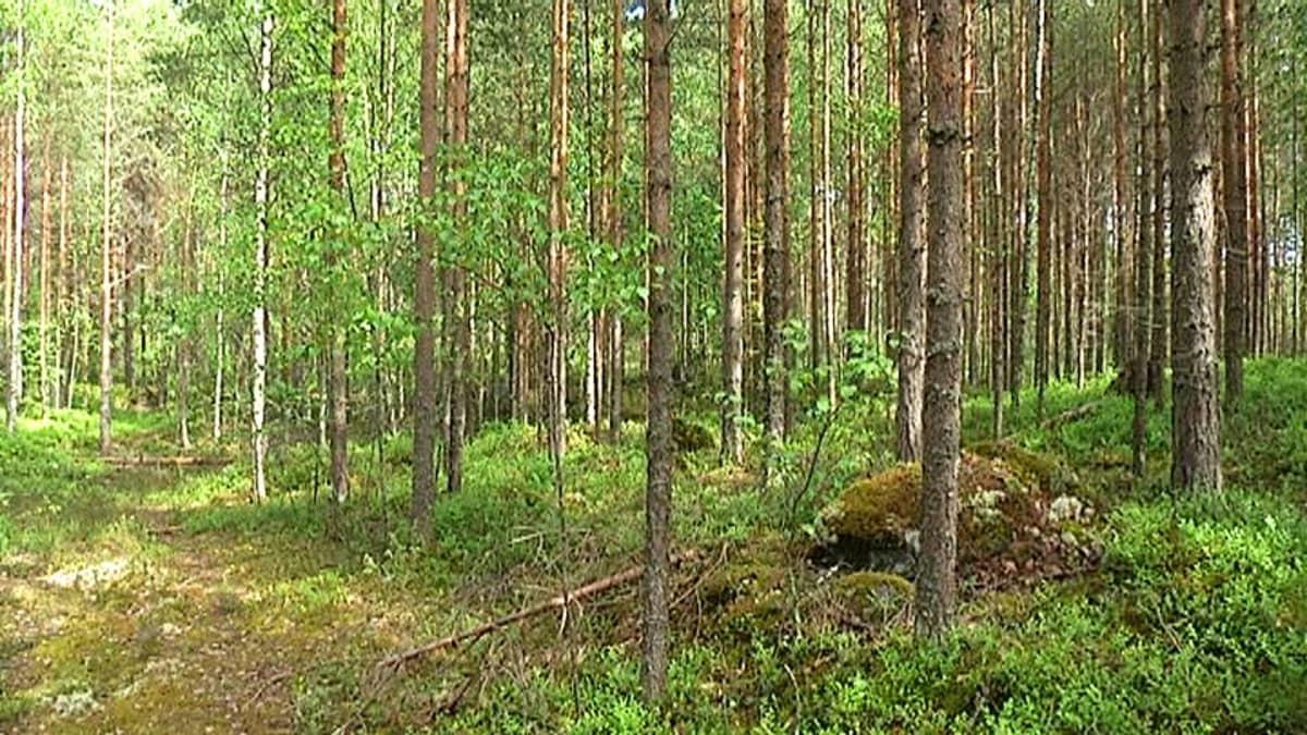 metsä tontti