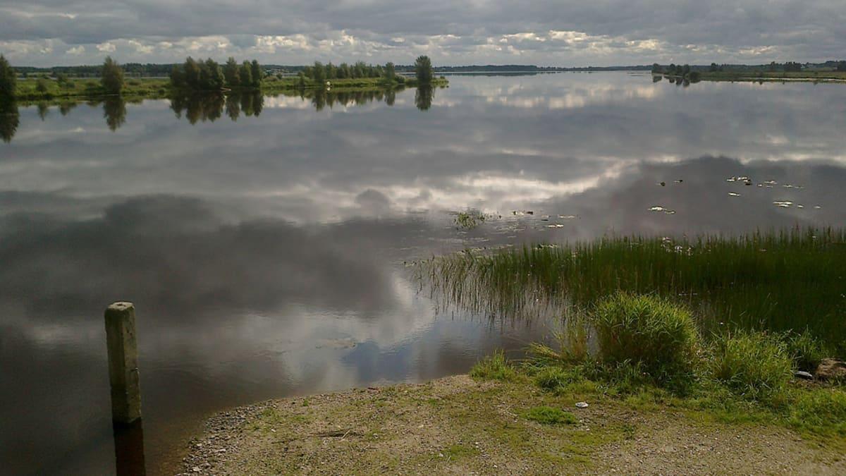 Kalajokea Nivalassa, taustalla Pidisjärvi.