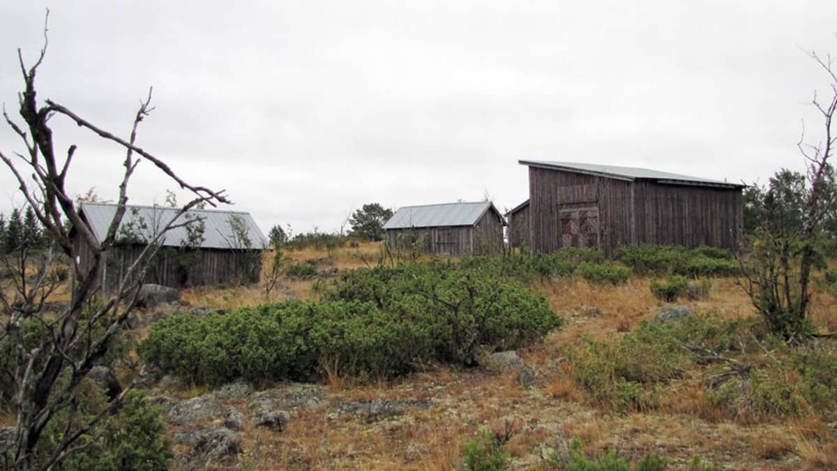 Tornion Pensaskarin saari on osa Perämeren kansallispuistoa.